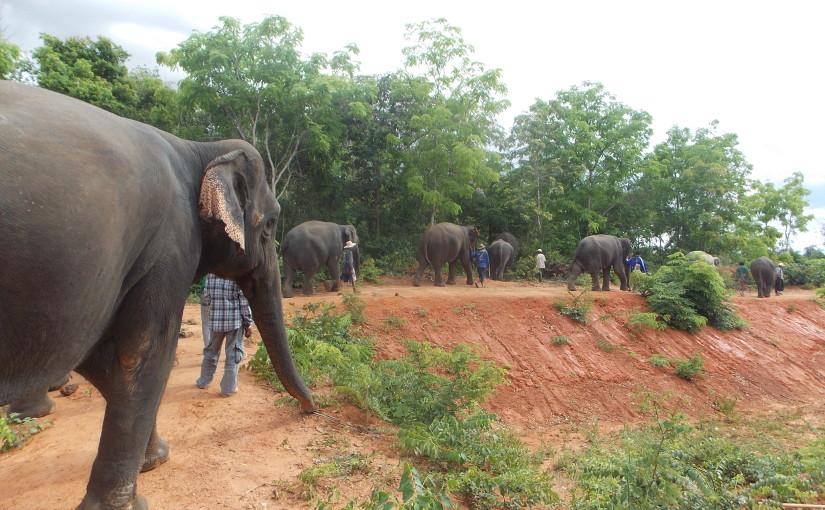 Frivillig arbeid med elefanter i Thailand